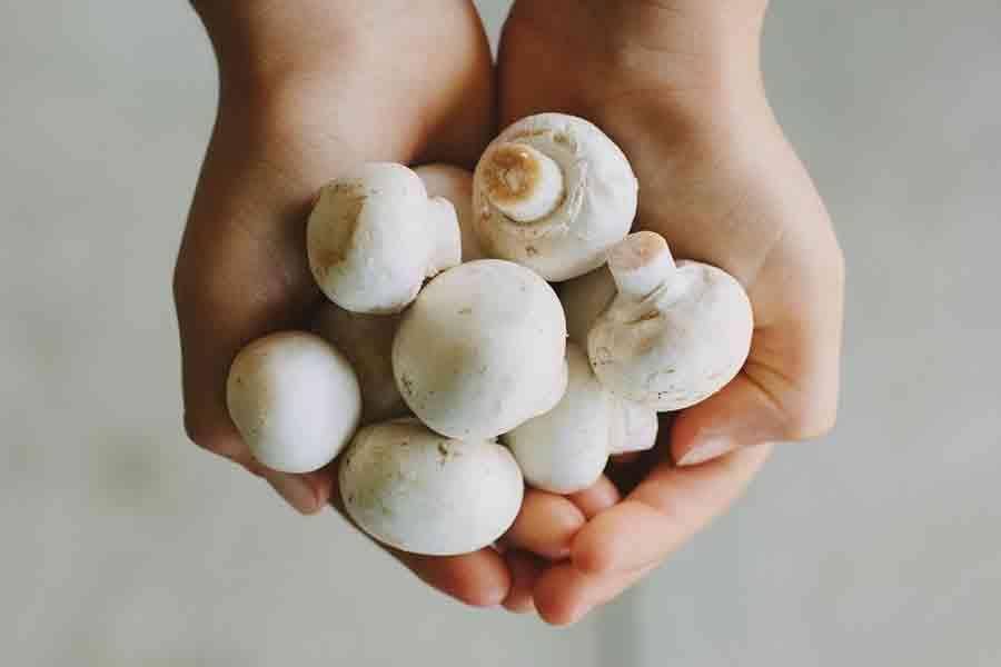 Makan Jamur Dapat Menurunkan Resiko Kanker